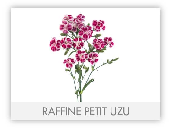 RAFFINE PETIT UZU -100