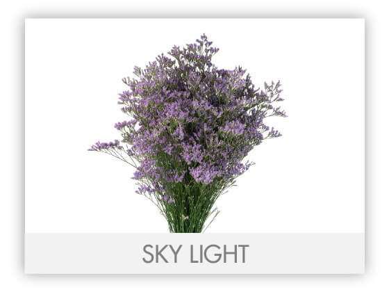 SKY LIGHT -100