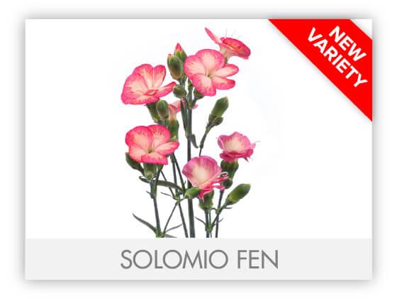 SOLOMIO FEN-100