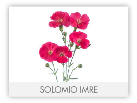 SOLOMIO IMRE -100