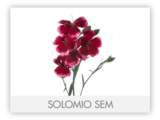 SOLOMIO SEM -100