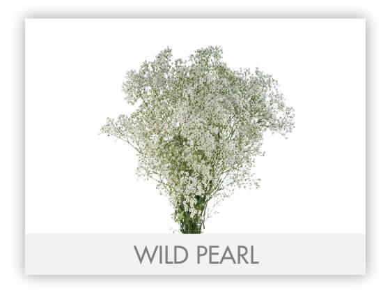 WILD PEARL -100