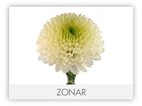 ZONAR-100