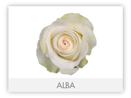 ALBA10
