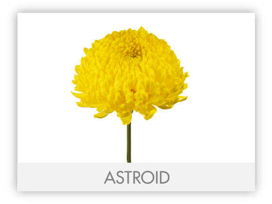ASTROID1