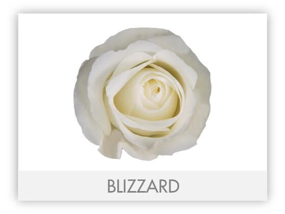 BLIZZARD10