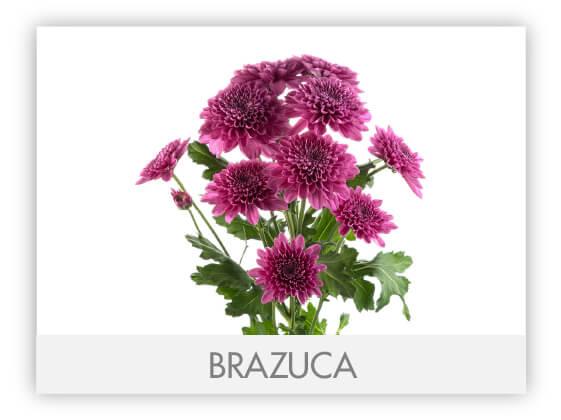 BRAZUCA100