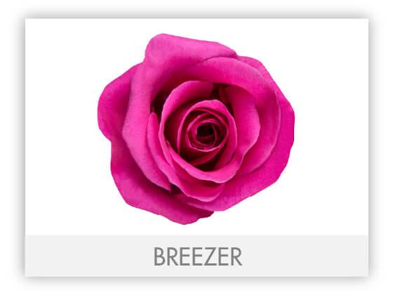 BREEZER10