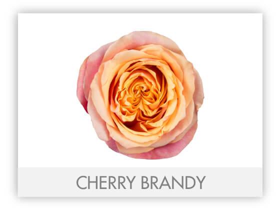 CHERRY BRANDY 10
