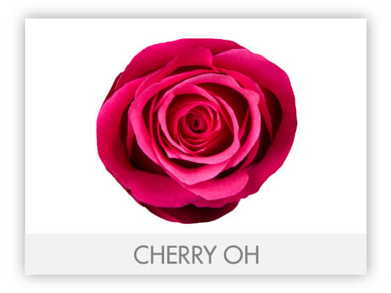 CHERRY OH 10
