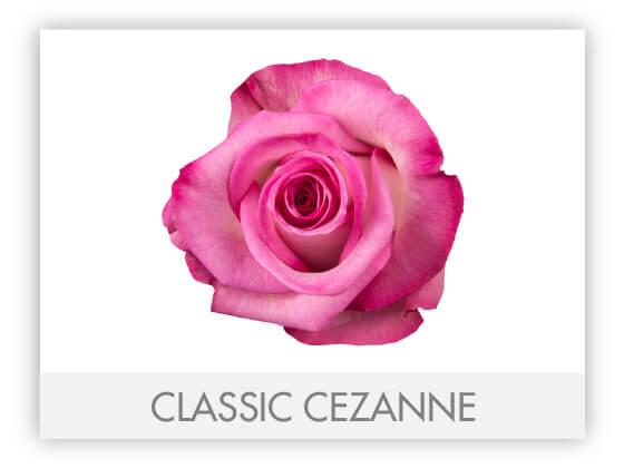 CLASSIC CEZANNE 10