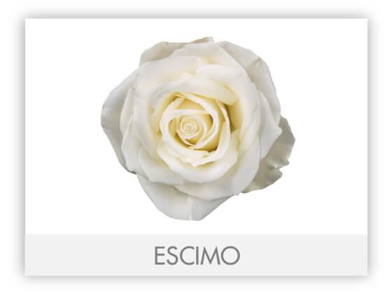 ESCIMO10