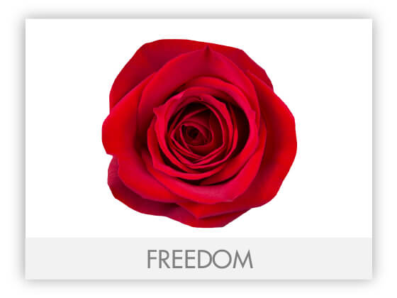 FREEDOM10