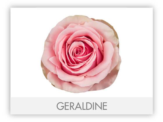 GERALDINE10