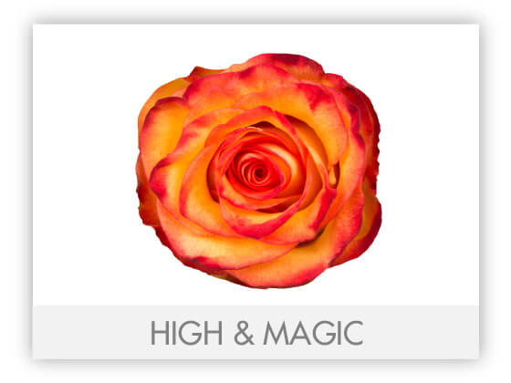 HIGH & MAGIC 10