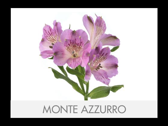MONTE AZZURRO