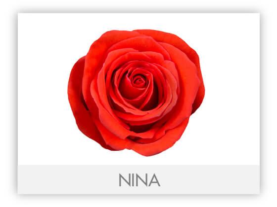 NINA10