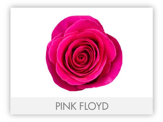 PINK FLOYD 10