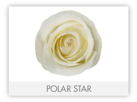 POLAR STAR 10