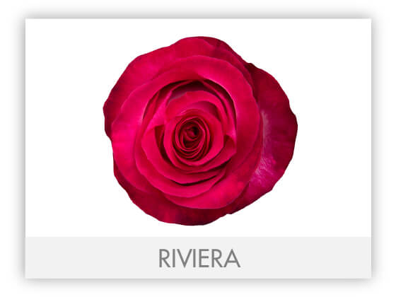 RIVIERA10