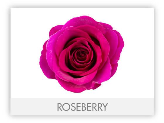 ROSEBERRY10