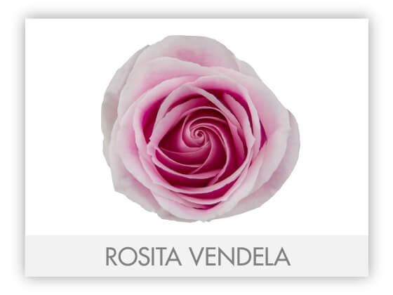 ROSITA VENDELA 10