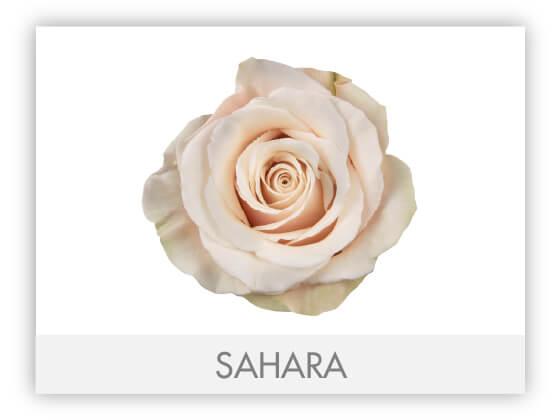SAHARA10