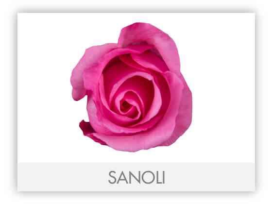SANOLI10
