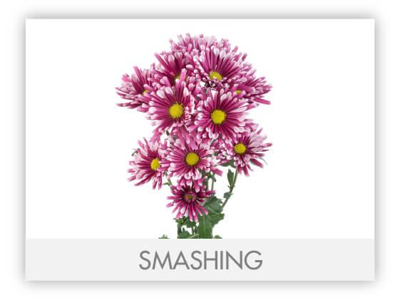 SMASHING_1100