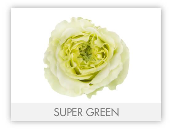 SUPER GREEN 10