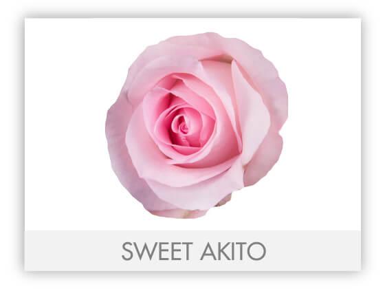 SWEET AKITO 10