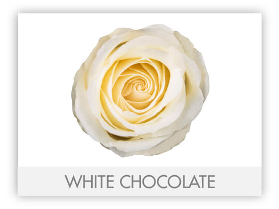 WHITE CHOCOLATE 10