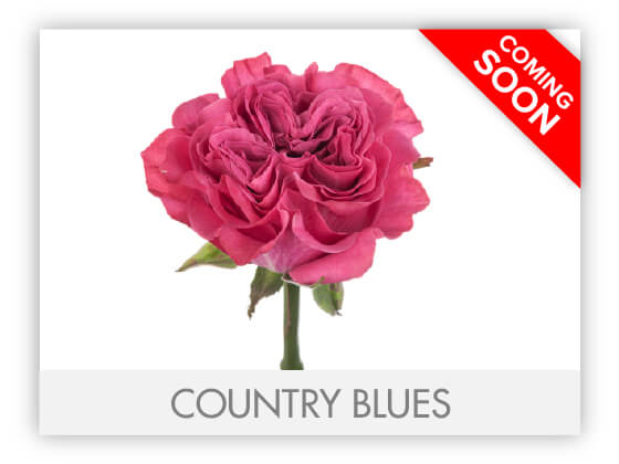 COUNTRY BLUESGLLRY