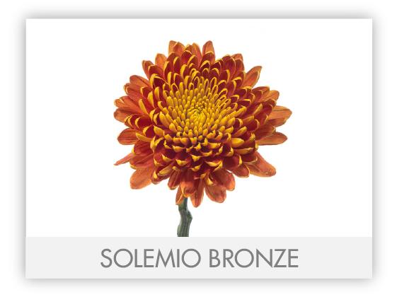 SOLEMIO-BRONZE-GALLERY