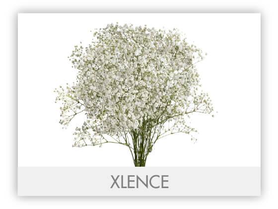 XLENCEGLLRY