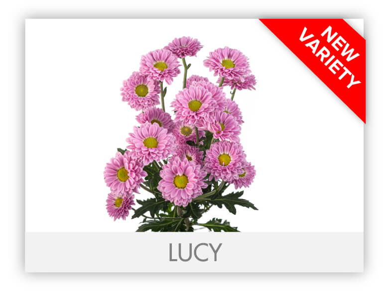 LUCY _GALLERY_N
