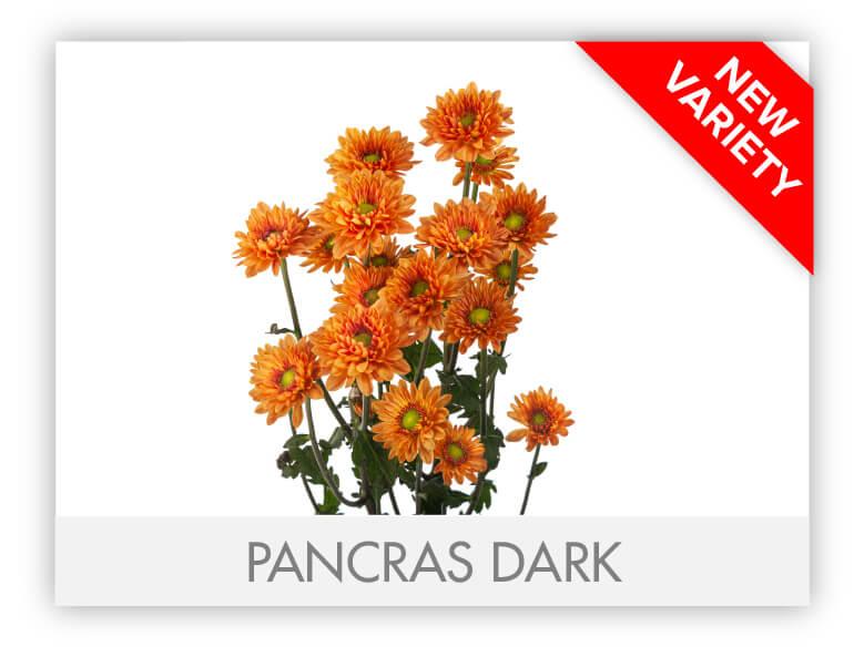 PANCRAS DARK _GALLERY_N