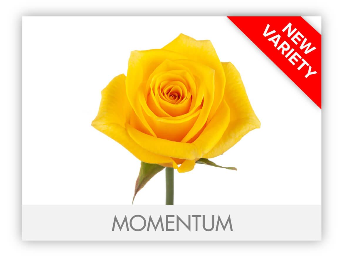 GLLRY_MOMENTUM