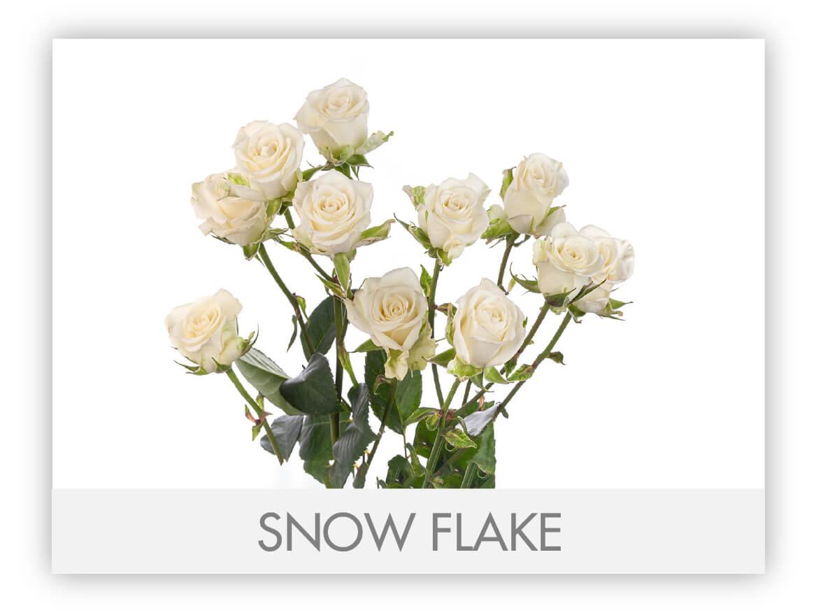 sflakegllry_ SNOWFLAKE
