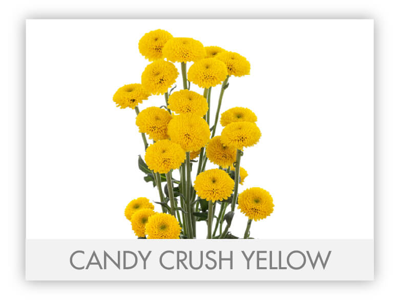 Candy Crush Yellow