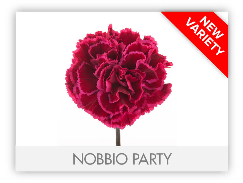 NOBBIO PARTY