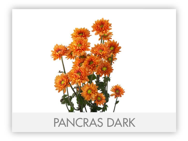 PANCRAS DARK