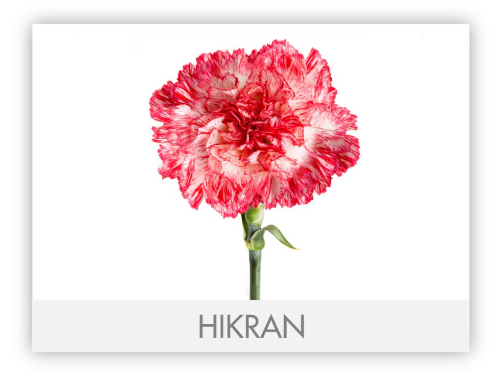 GALLERY_-HIKRAN-2