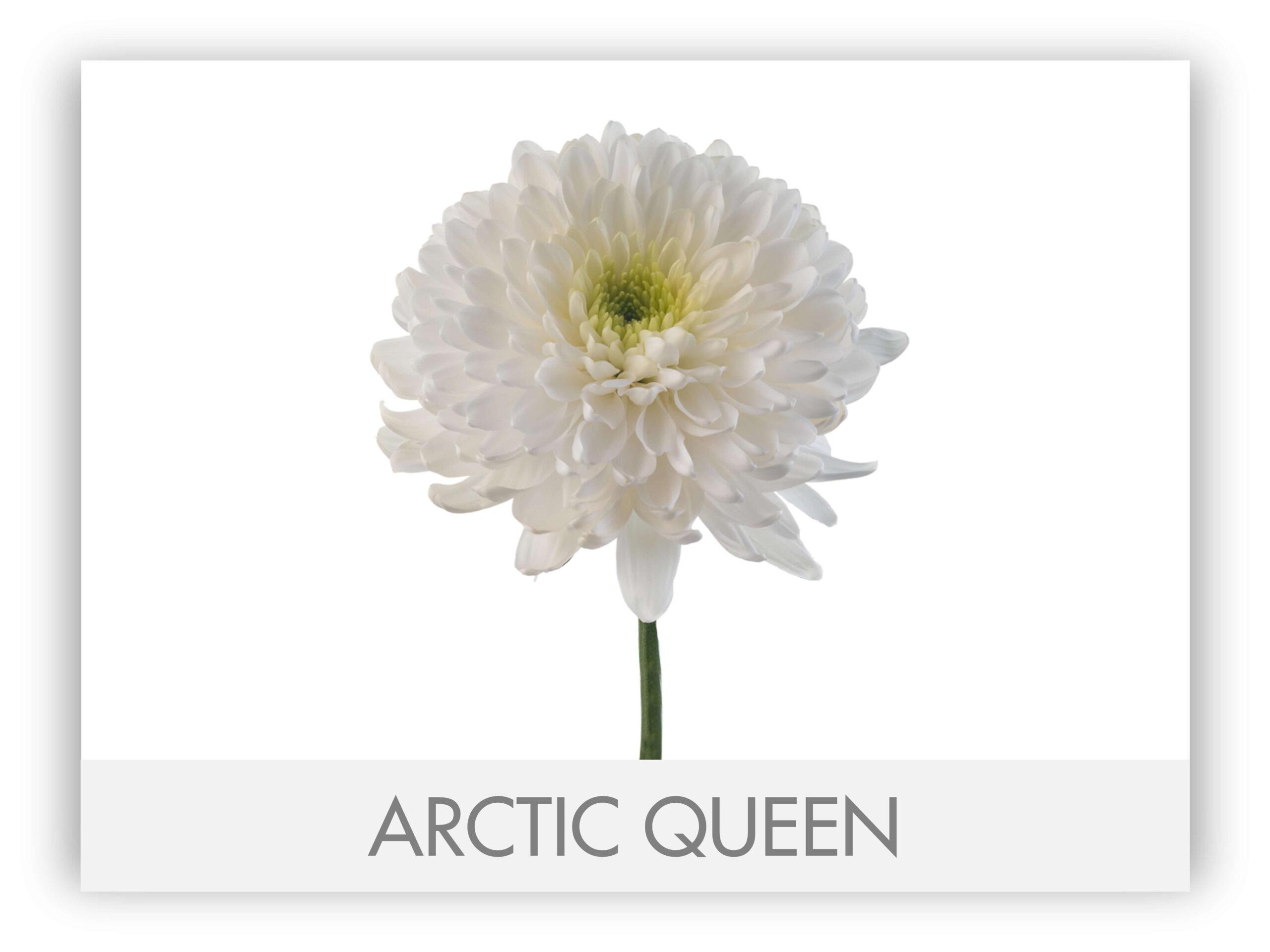 ARCTIC SLICE2