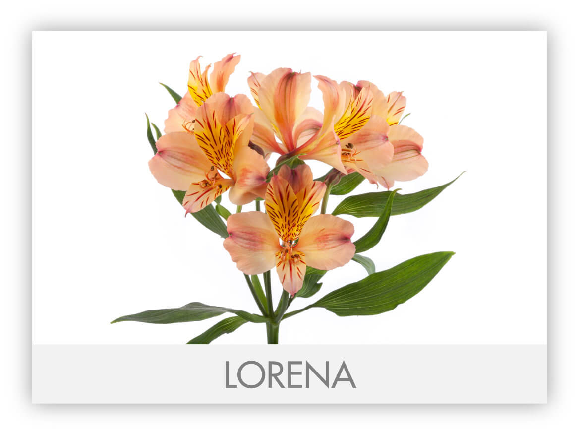 LORENA GLLERY