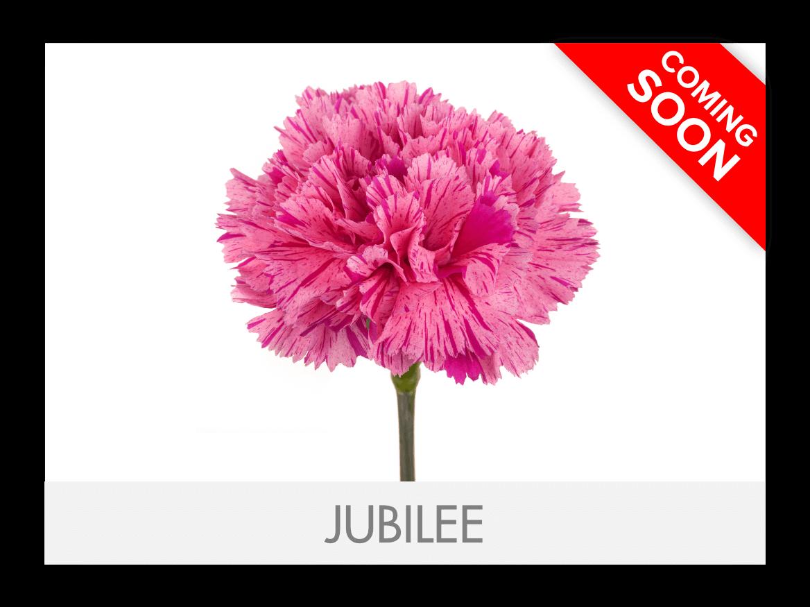 Jubilee_G