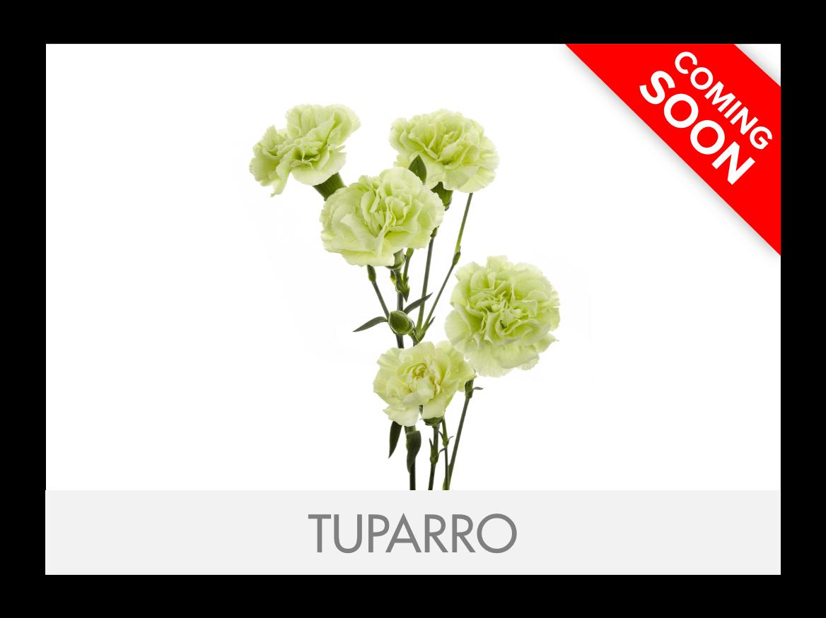 Tuparro_G