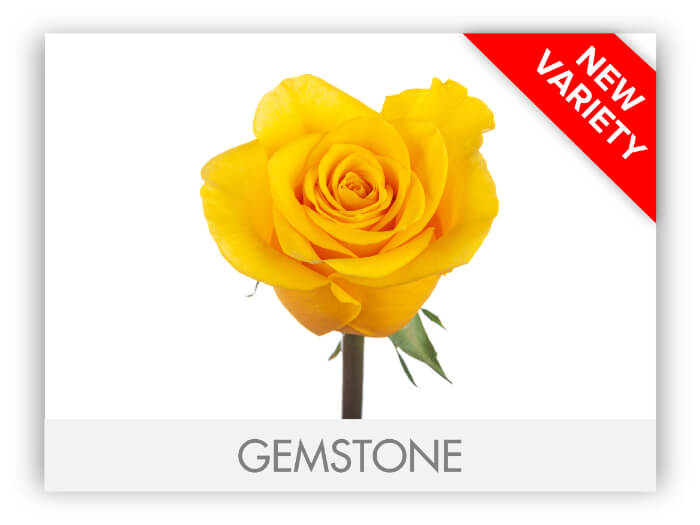 GEMSTONE GALLERY-2