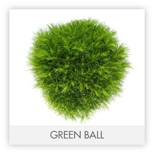 GREEN BALL10