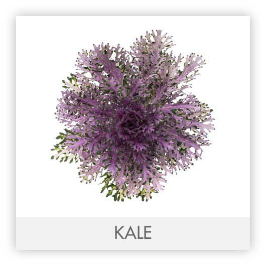 KALEGALLERY1